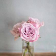 pink-roses-vase-jar-three-roses-pale-pink-nikki-kirk-photography-wedding-photographer-nkp-commercial-flowers-pink-roses-lilyfee-floral-designs.jpg