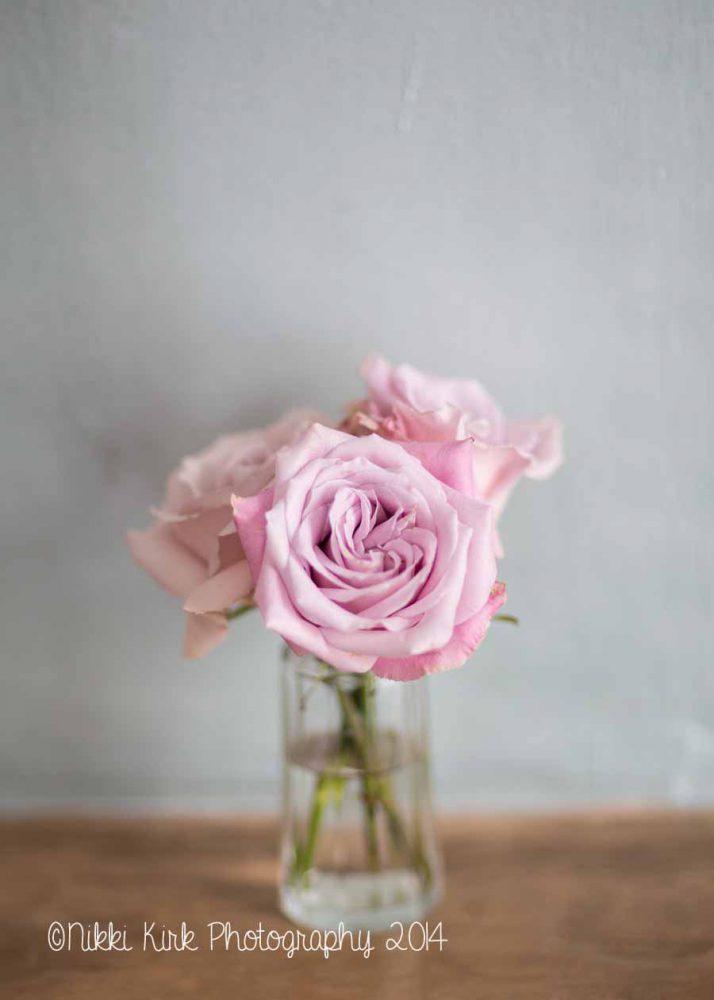 Pink Roses Vase Jar Three Roses Pale Pink Nikki Kirk Photography