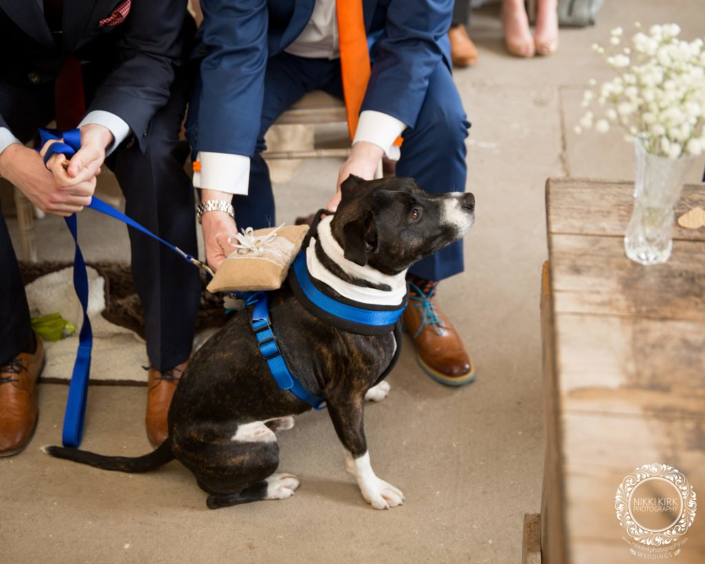 Priors-Tithe-Barn-wedding-photography-dogs-ring-bearer-at-wedding